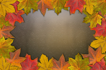 yellow maple leaves on glass background closeup