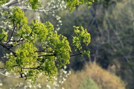 flowering spring tree closeup in a forest Фото со стока