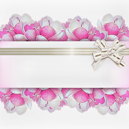 magnolia soulangeana: square white background with pink magnolia flowers and white bow Stock Photo