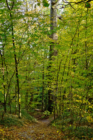 withering: vertical landscape with path in autumn deciduous forest