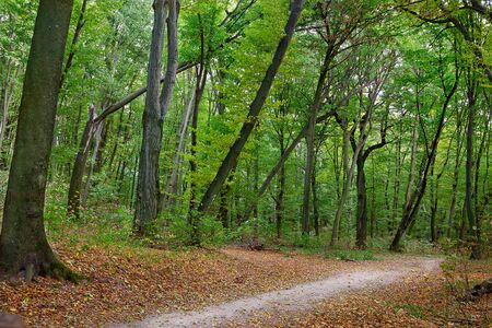 strewn with fallen leaves trail in autumn forest Stock Photo