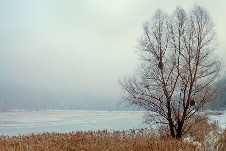 snowy field: winter landscape lone tree in a snowy field foggy overcast day Stock Photo