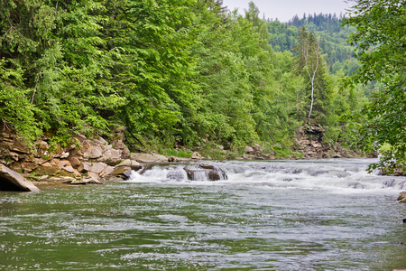 Mountain river Prut in the Ukrainian Carpathians