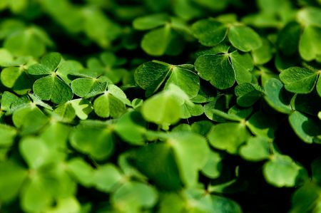 Clover Stock Photo - 3244189