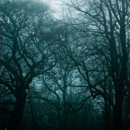 dreary: Spooky Forest Stock Photo