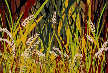 Illustration of paddy field about to harvest  illustration
