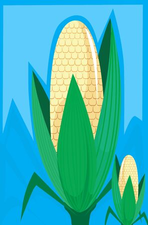 maize: Illustration of maize with petals in blue  background