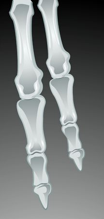 talus: Illustration of human finger bone  Stock Photo