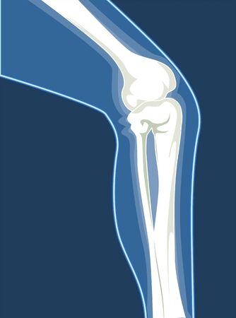 tarsus: Illustrazione di ossa umane gamba