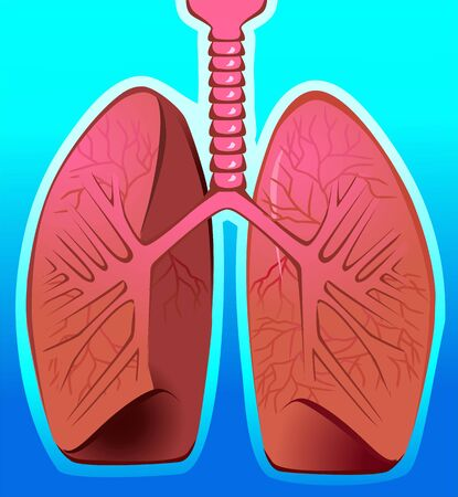 gullet: Illustration of human lungs in blue background  Stock Photo