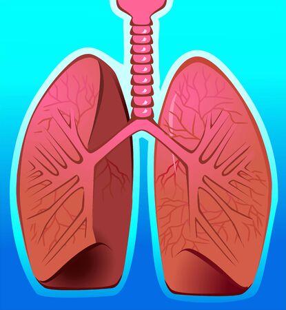 gullet: Ilustraci�n de los pulmones en el fondo azul Foto de archivo
