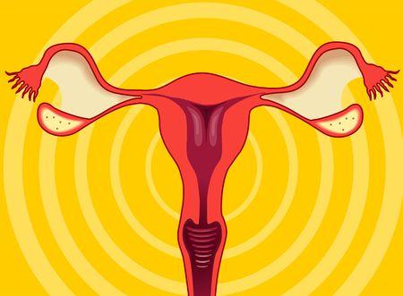 Illustration of ovary of human female