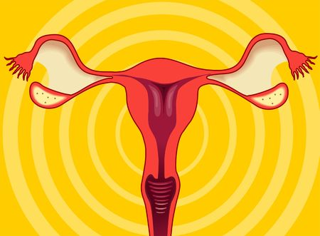 ovario: Ilustraci�n de ovario de la mujer
