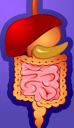 gullet: Illustration of internal digestive system  Stock Photo