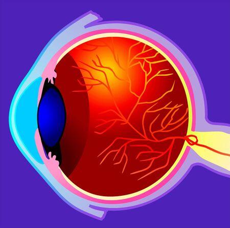 Illustration of eyeball with veins  illustration