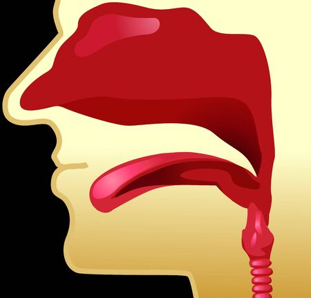 gullet: Illustration of human trachea in yellow background  Stock Photo