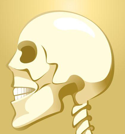 ulna: Illustration of skull in brown background  Stock Photo