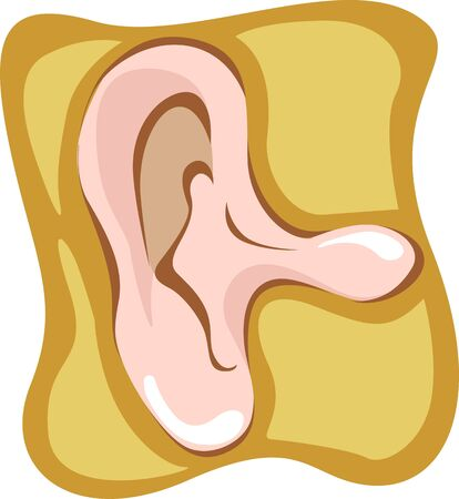 utricle: Illustration of human outer ear