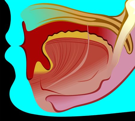 Illustration of organs in human mouth Stock Illustration - 3389790