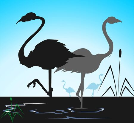 whooping: Illustration of two cranes in water