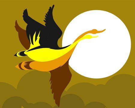 albatross: Illustration of a albatross flying   Stock Photo