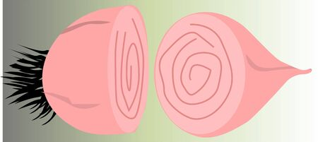 pealing: Illustration of a onion in two pieces  Stock Photo