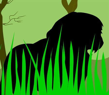 cougars: Illustration of a silhouette of lion in grass