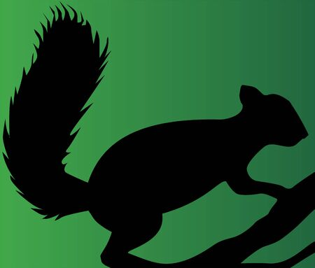 black squirrel: Illustration of a silhouette of a squirrel