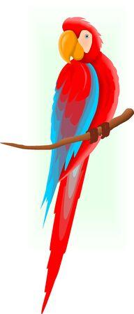 Illustration of a Macaw  illustration