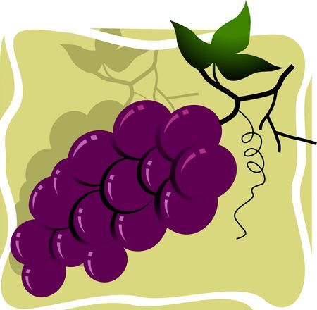 fruitful: Illustration of bunches of grapes with leaves     Stock Photo