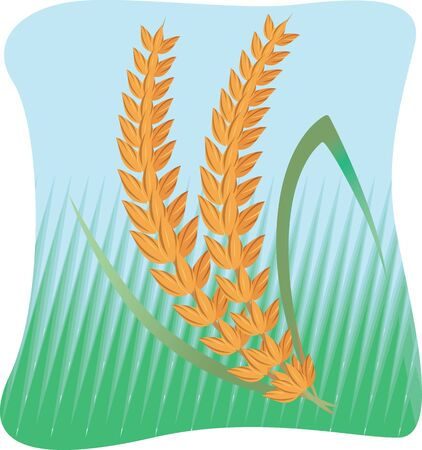 Illustration of a grass and wheat in  blue background Stock Illustration - 3919433