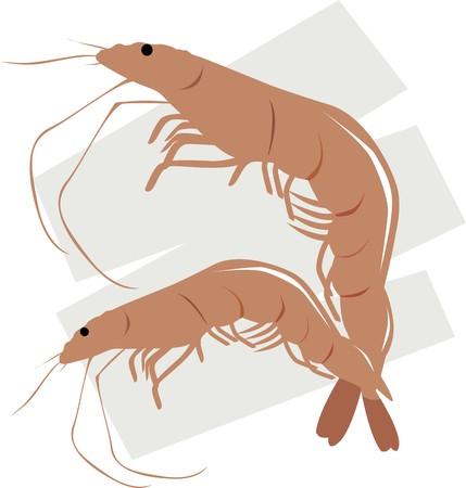 viandes et substituts: Illustration de deux types de crevettes avec un arri�re-plan