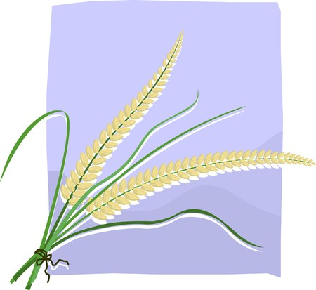 Illustration of a wheat in a violet background illustration