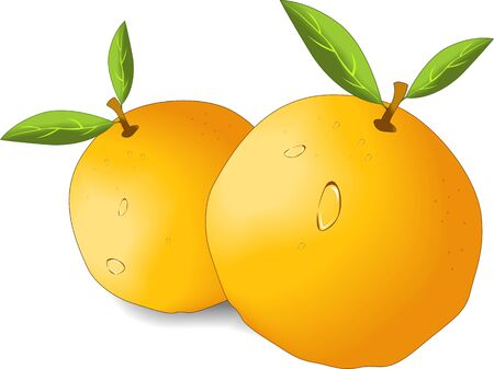 Illustration of two oranges in a white background illustration