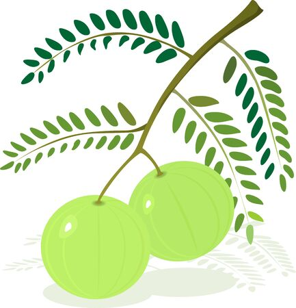 pickle: Illustration of two gooseberry with leaf