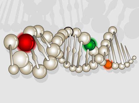 Illustration of pearl model of DNA