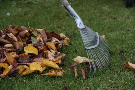 Raking autumn leaves, gardening during the holidays (horizontal) Stock Photo