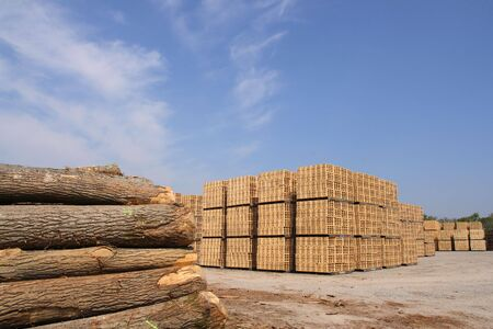 sawn: Sawn trees and wooden packing crates (horizontal) Stock Photo