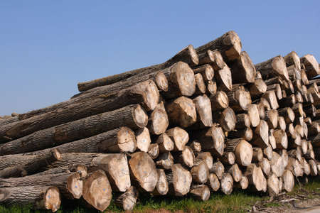 sawn: Perspective of sawn trees (horizontal)