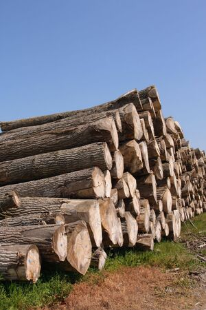 sawn: Perspective of sawn trees (vertical)