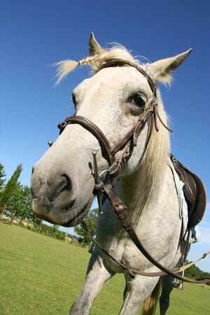 Saddled horse with a braid, ready for a ride Stock Photo - 1424324