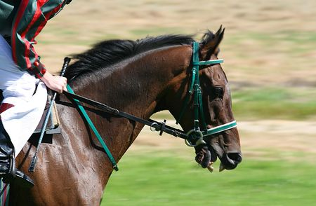 Head of a Horse racing, motion blur in the background Stock Photo - 1808726