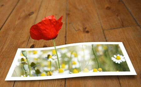 Poppy looming from a printed photo paper, on the floor