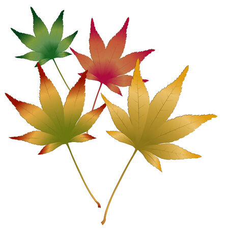 Japanese Maple leaves vector Vector