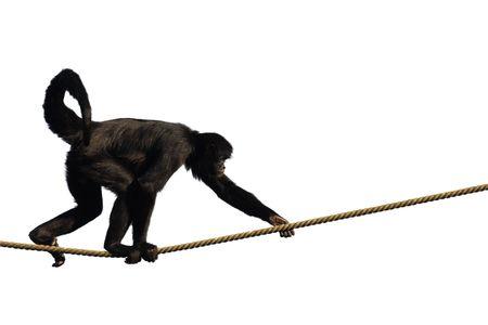 flink: Monkey Klettern auf einem Seil, isoliert auf wei�em