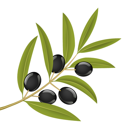 Black olives on branch, detailed vector illustration Illustration