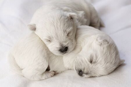 Adorable sleeping puppies, only a few days old Stock Photo