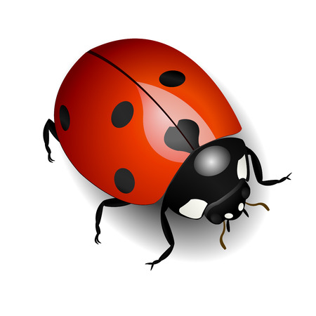 Vector illustration of a ladybug over white