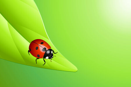 Vector illustration of a ladybug on a leaf