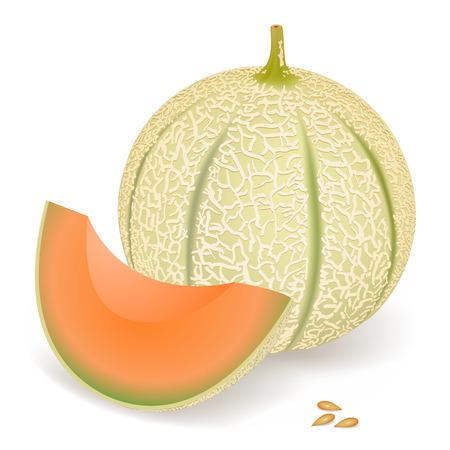 Een heerlijke meloen, vector illustration